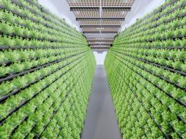 Indoor-Farming / In-Door-Anlage MABEWO AG