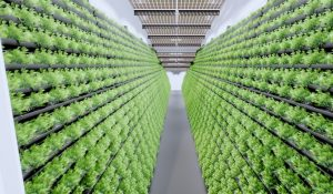 Indoor-Farming / In-Door-Anlage MABEWO AG