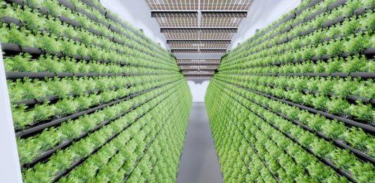 Vertical Farming - In-Door-Anlage MABEWO AG