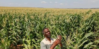 Basic right to employment and affordable basic food in Africa
